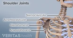 Is located on the front, upper part of the body and is the area that contains the lungs and the heart. Shoulder Joint Structure