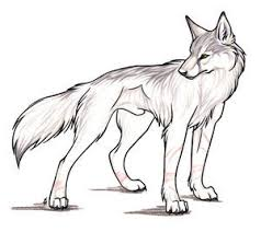white wolf drawing anime. Contemporary White Wolves Images Wolf Wallpaper And Background Photos On White Drawing Anime