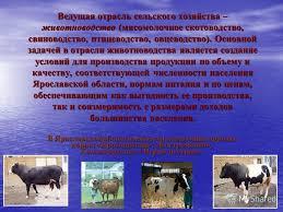 Презентация на тему Презентация Злобиной Яны Целью реферата  4 Ведущая отрасль сельского хозяйства животноводство