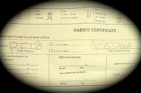 rabies vaccination certificate investigative report asks are some vets lying about rabies
