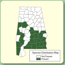 Trifolium nigrescens - Species Page - APA: Alabama Plant Atlas