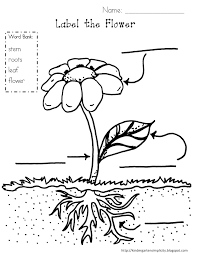 Colouring Sheets Flowers Plantsll L