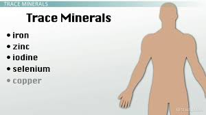 Minerals Functions Food Sources