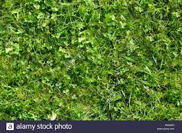 wild grass texture.  Texture Wild Grass Texture That Perfectly Loop Horizontally And Vertically And Grass Texture