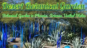 visiting desert botanical garden botanical garden in phoenix arizona united states