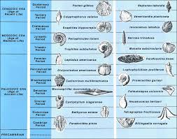 Era And Period Chart Geologic Time Index Fossils