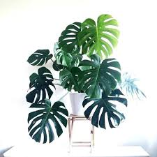5 indoor plants for your cafe global blog photos of common house types tall the best home be
