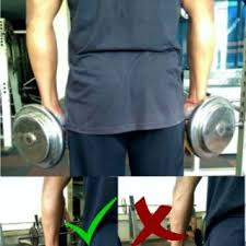 forearm size increase forearm size archives strength and gain