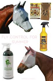 best fly control s for summer