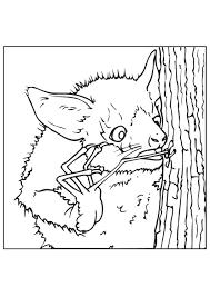 Disegno Da Colorare Pipistrello Cerca Insetti Cat 9445 Images
