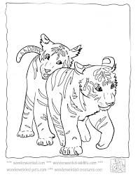 Baby Tiger Coloring Pages At Wwwwonderweirded Wildlifecombaby