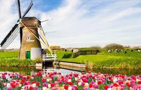 图片结果荷兰留学