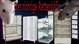 Rattenhaltung aber RICHTIG: der Rattenkäfig - YouTube