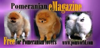 Pomeranian Growth Chart Poms Miniature Pomeranian