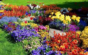 flower gardens pictures. Very Wonderful Mini Flower Garden Ideas - Design : Electoral7.com Gardens Pictures