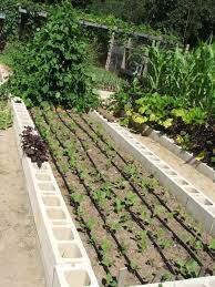Small Picture Drip Irrigation Design For Vegetable Garden Garden Ideas