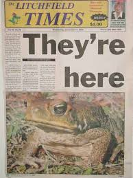 Image result for BullFrog Invasion