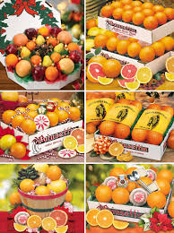 remember florida grows the best citrus in the world is grown there is no better gift to send for the holidays then our florida oranges and gfruit