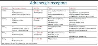 Adrenergic Receptors Chart 22 Extraordinary Adrenergic Receptors Chart