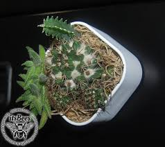 office cubicle plants. Mini Live Cactus Garden Magnet - 2\ Office Cubicle Plants