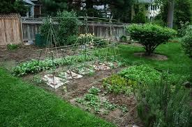 vegetable gardening tips starting