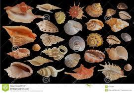 Seashell Collection Stock Image Image Of Summer Coast