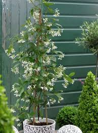 How To Choose A Climbing Plant For Every Season  Garden  Life Wall Climbing Plants In Pots