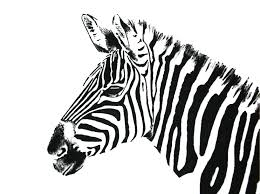 Zebras Drawings Wallpaper Picture With Wallpaper