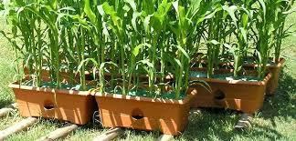 the garden patch garden supplies garden patch grow box planter container garden patios backyards garden patch