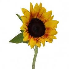 Image result for פרח