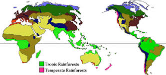 Total 57% of all tropical rainforests are found in latin america. Where Are Rainforests Located