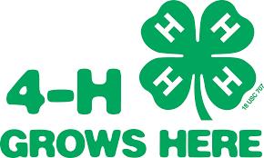 Image result for 4-h clover