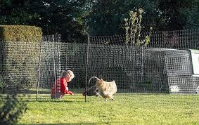 omlet en fencing poultry netting