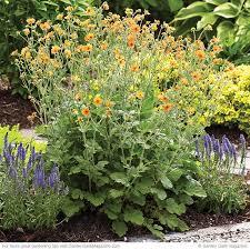 Small Picture 167 best Garden Design Ideas images on Pinterest Garden gate