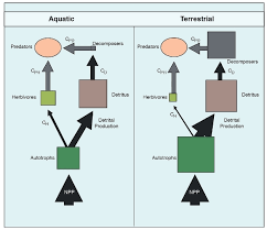 food web diagram generator smartdraw diagrams food web trophic levels explained diagram