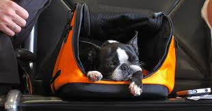 how to keep your pet safe on a flight
