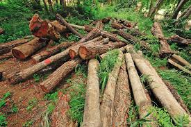 অন্যরকম পড়াশোনা essay deforestation and its  deforestation means cutting down trees indiscriminately from an area it is one of the much talked global problems which is haunting the whole world