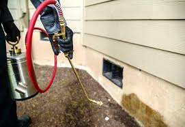 Pest Control Tampa - Emergency Pest Control Services