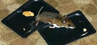 best humane mouse trap humane mouse trap bait