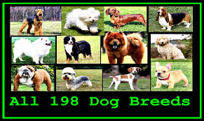 dog breeds alphabetical. Fine Breeds With Dog Breeds Alphabetical F