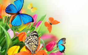Colorful Butterfly Wallpapers - Top ...