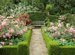 Small Picture Box Hedge Plants and Borders