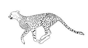 This unique collection of coloring pages has been dedicated to the fastest mammal on earth that is nearing extinction. Free Printable Cheetah Coloring Pages For Kids