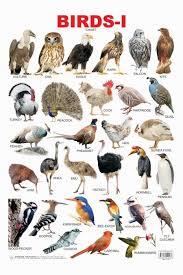 Birds Chart For Kindergarten Educational Charts Series Birds 1