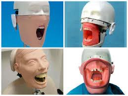TIL that dental training mannequins are among the most horrific.