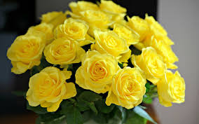 69 yellow roses wallpapers on wallpaperplay
