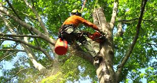 Pin by Ronald Behrendt on Tree care Service | Tree trimming service, Tree  removal, Tree care