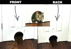 home depot cat door
