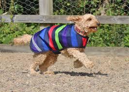 1200 denier waterproof dog coat multi stripe s m