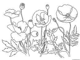 Disegno Di Poppy Dei Trolls Da Colorare Con Disegni Di Migliori